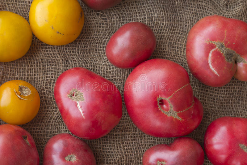 colors röd tomatyellow för heirloom royaltyfri bild