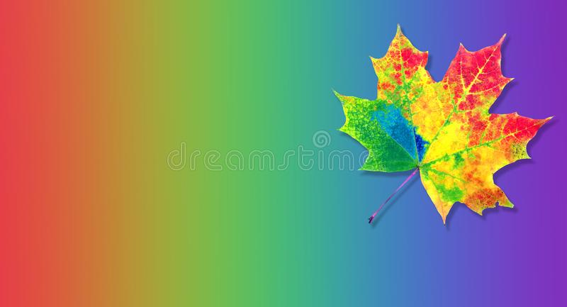Colors of rainbow. color concept in nature. bright colorful autumn maple leaf. copy spaces. stock photos