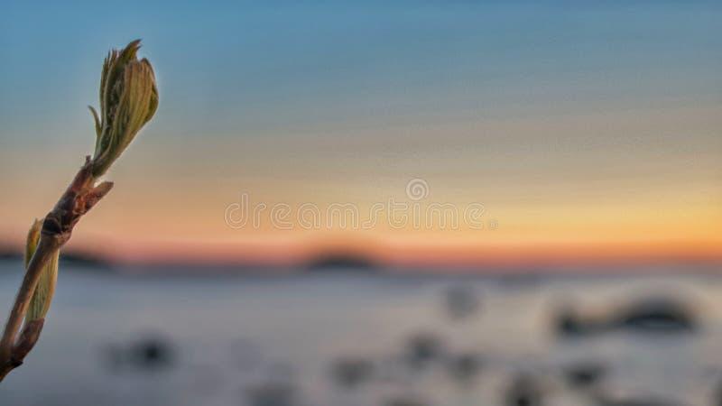 colors solnedgång arkivfoto