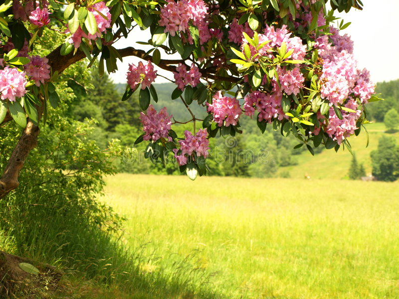 The colors of spring. Flowering nature in the spring royalty free stock images