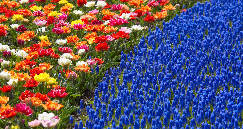 Download Colors Of Spring Royalty Free Stock Image - Image: 774586