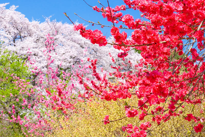 Colors of spring flowers royalty free stock images