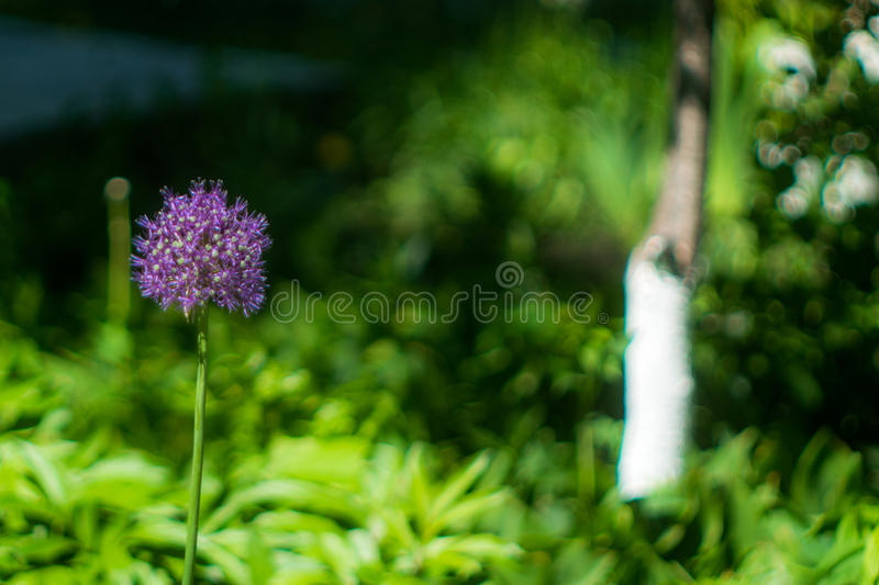 Colors of Spring stock photography