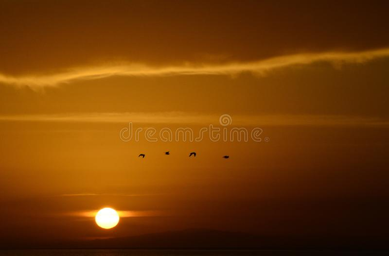 Colors of the sunset with seagull royalty free stock photos