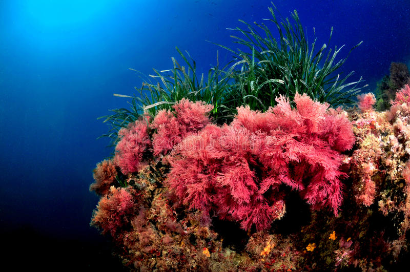 Colors of the Tyrrhenian Sea stock images