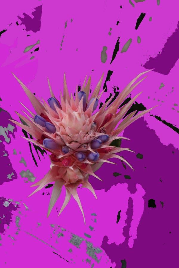 Colorscomposition cor-de-rosa no fundo com as folhas ocasionalmente translúcidas de uma bromeliácea fotos de stock