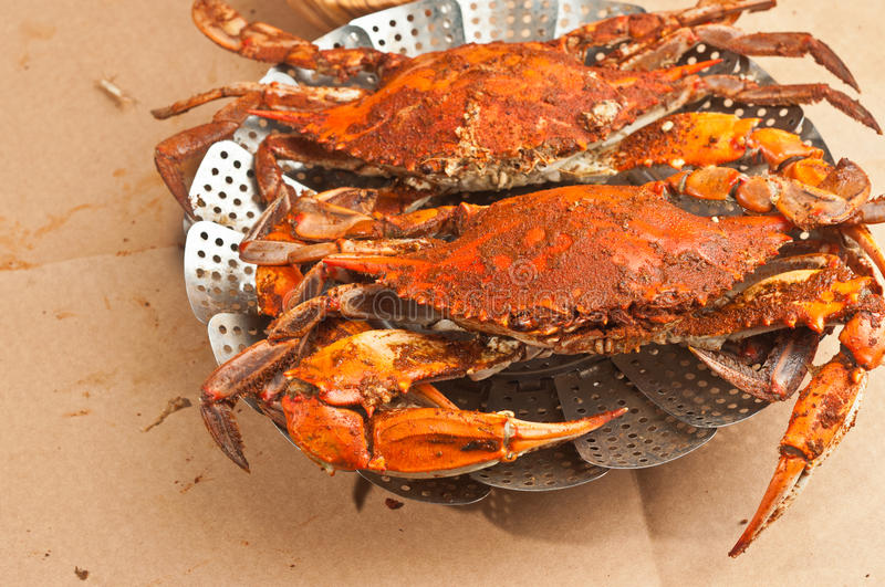 Colossal, steamed and seasoned chesapeake blue claw crabs on a brown paper table cover. Two colossal, steamed and seasoned chesapeake blue claw crabs on a metal royalty free stock photos