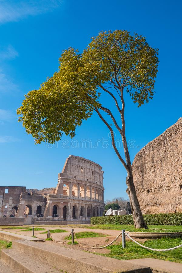 Colosseum as seen from the Palatine Hill in Rome, Italy stock images