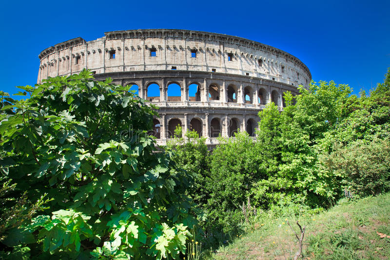 colosseum Rome obraz royalty free