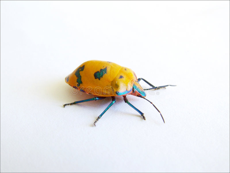Colour Bug 2 stock photos