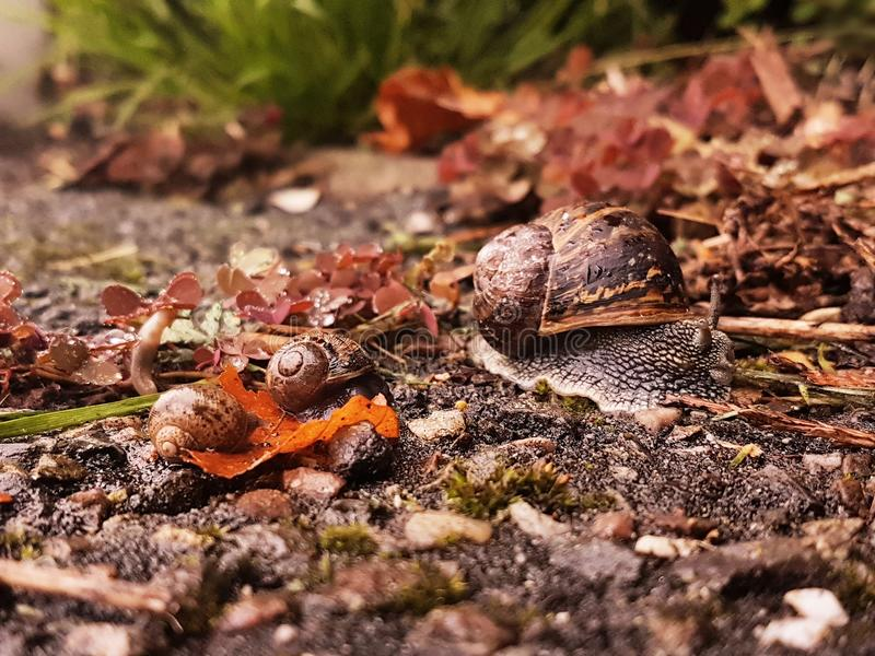 Colour photo of a family of snails royalty free stock photography