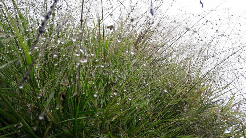 Colourbox hojea la hierba de la primavera de la naturaleza en madrugada imagen de archivo