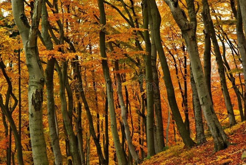 Coloured Autumn Stock Photo