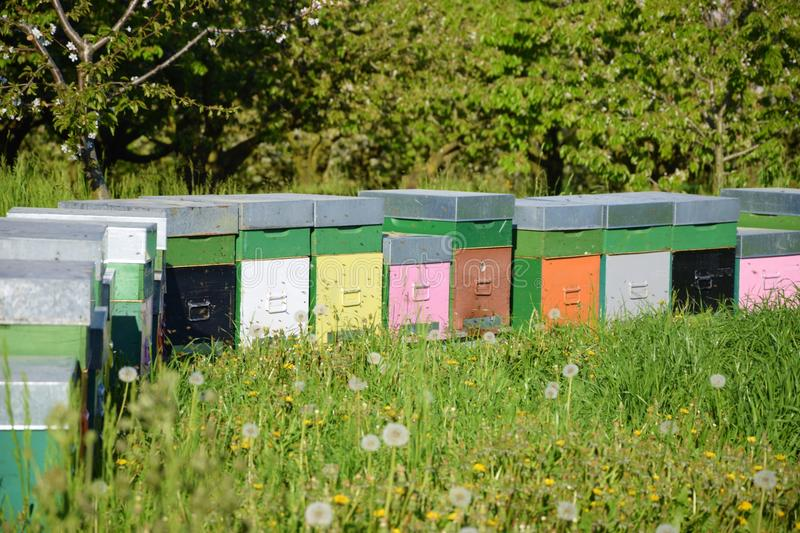 Coloured beehives in the meadow royalty free stock image