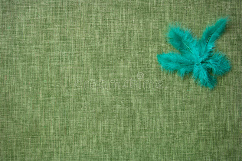 Coloured bird feathers on a fabric background. Intended for craft royalty free stock photography