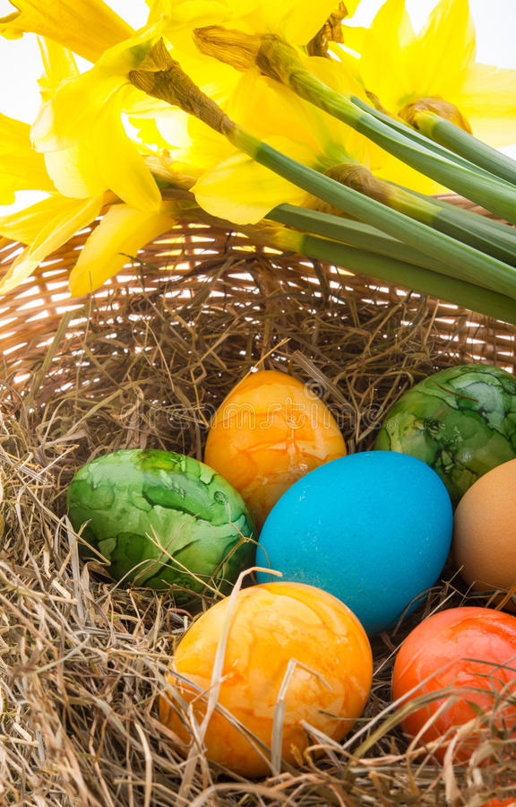 Download Coloured eggs stock photo. Image of easter, flower, happy - 29029450