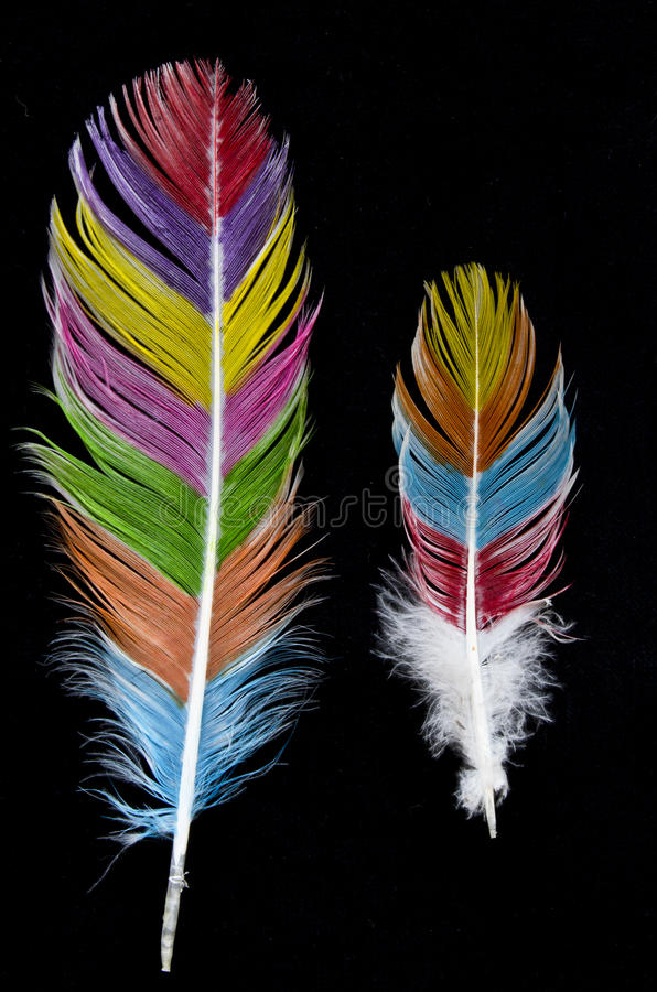 Coloured Feathers on Black Background. Abstract Coloured Feathers on Black Background royalty free stock photography