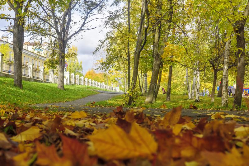 Coloured maple leaves in autumn park. View from frog perspective royalty free stock photos