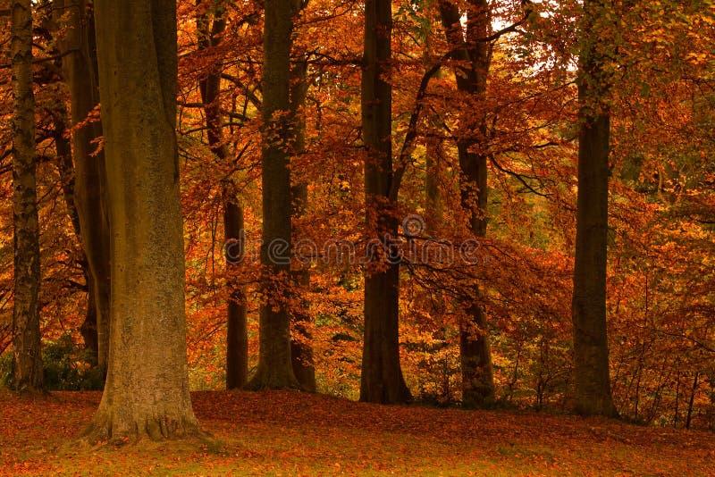 Colourful Autumn (Fall) trees royalty free stock photos