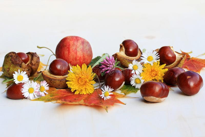 A colourful autumn with flowers, chestnuts and apples stock photos