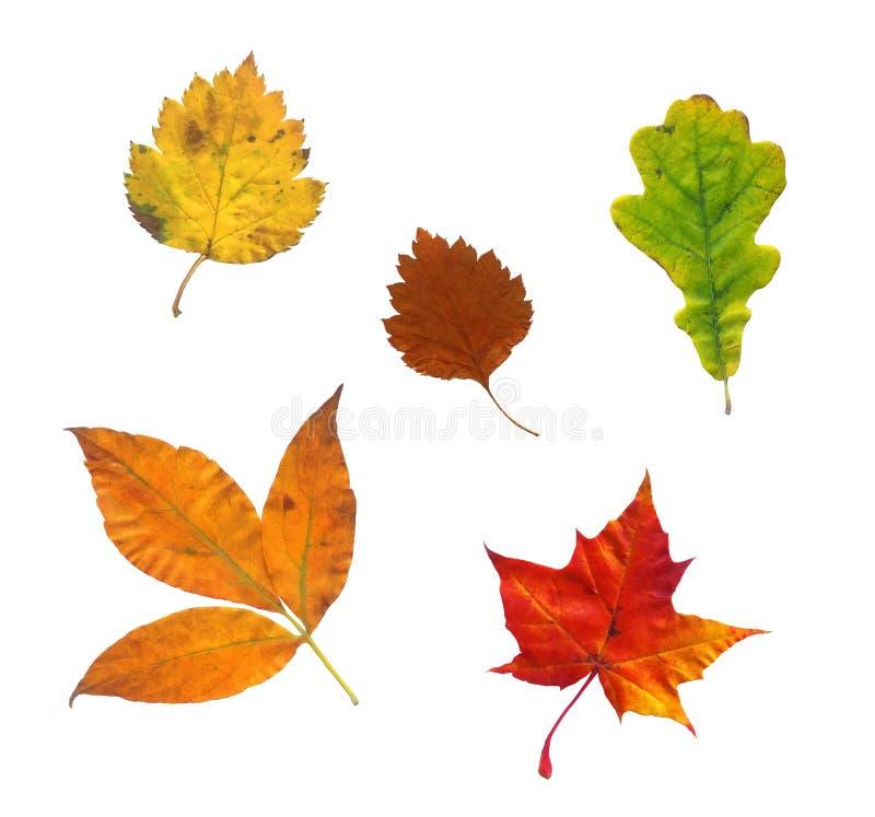 Free Colourful Autumn Leaves Stock Photos - 5872633
