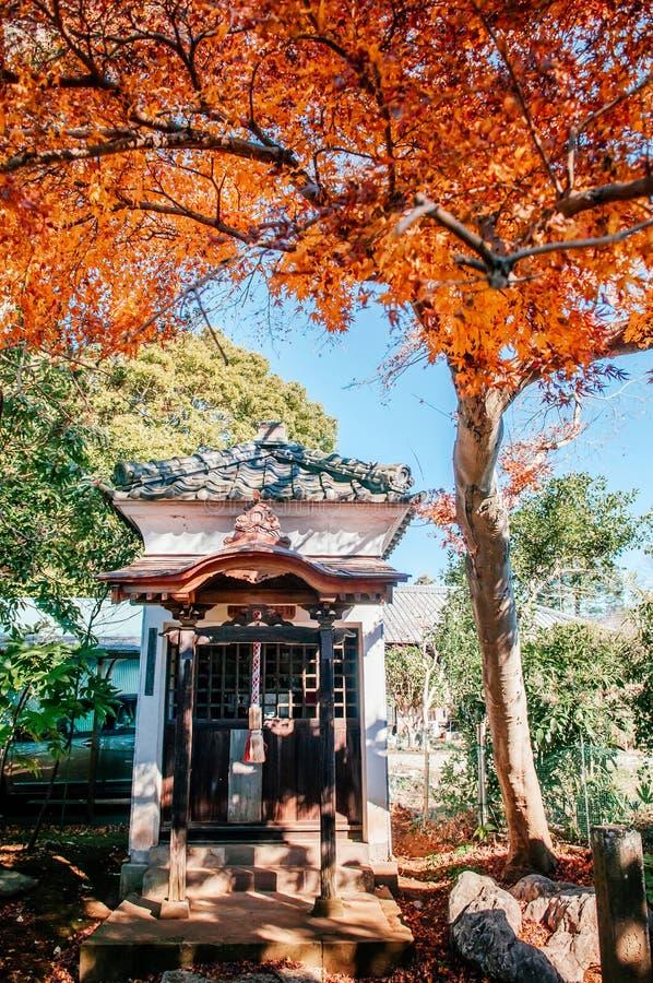 Colourful Autumn leaves and shrine of Former Hotta House, Sakura city, Chiba, Japan. DEC 11, 2012 Chiba, JAPAN - Colourful red yellow autumn leaves foliage and royalty free stock image