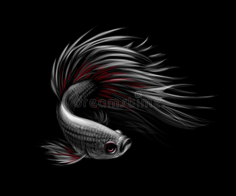 Colourful Betta fish, Siamese fighting fish in movement. Colourful Betta fish,Siamese fighting fish in movement isolated on black background. Vector illustration vector illustration