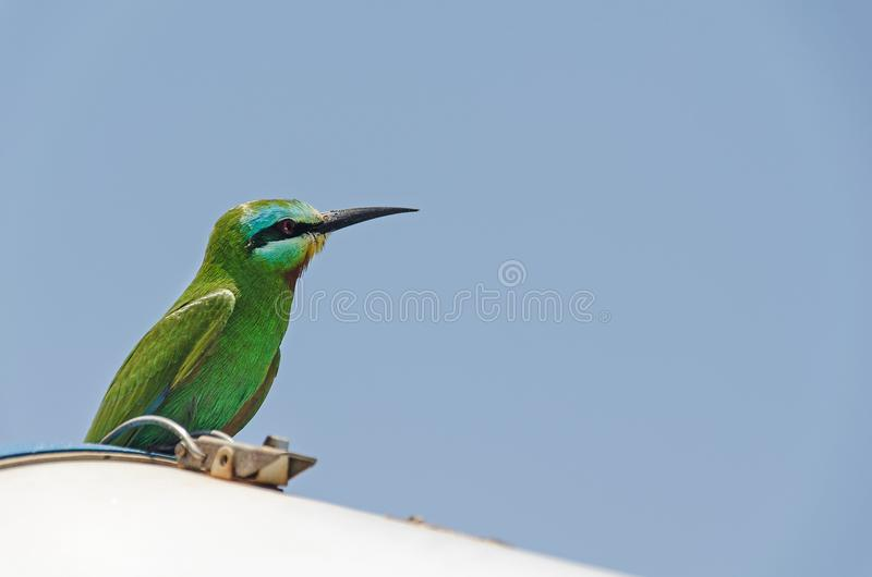 A colourful bird. Looking in the sky stock photo