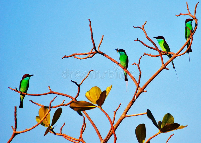 Colourful Birds On Tree Branch Royalty Free Stock Photography