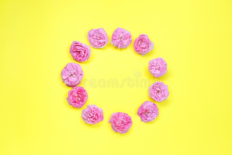 Colourful bright floral composition. Round frame made of pink rose flowers on yellow background. Flat lay, top view, copy space stock images