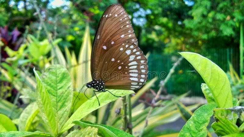 Colourful butterfly in garden, full green background royalty free stock photo