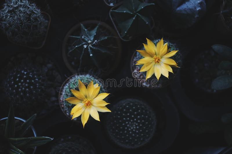 Colourful Cactus flower plant nature flowers. Nature background and space for text stock image