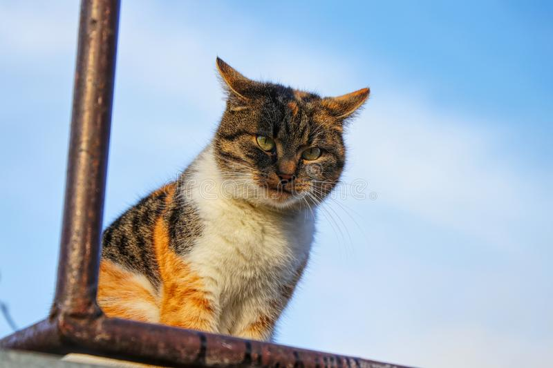 A colourful cat playing on killer with brutal view on me. A domestic cat sitting on the shelf in outdoor stock image