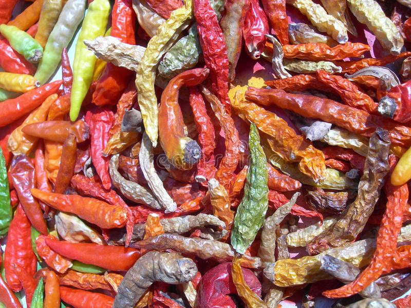 Colourful chilli