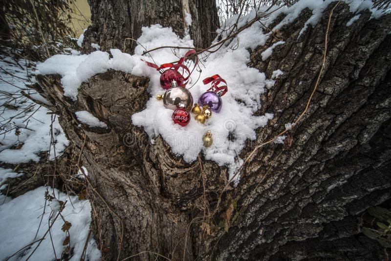 Christmas ornaments in snow royalty free stock image