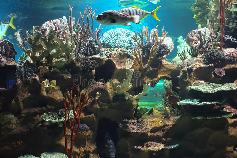 Download Colourful coral reef stock image. Image of explore, marine - 22972495