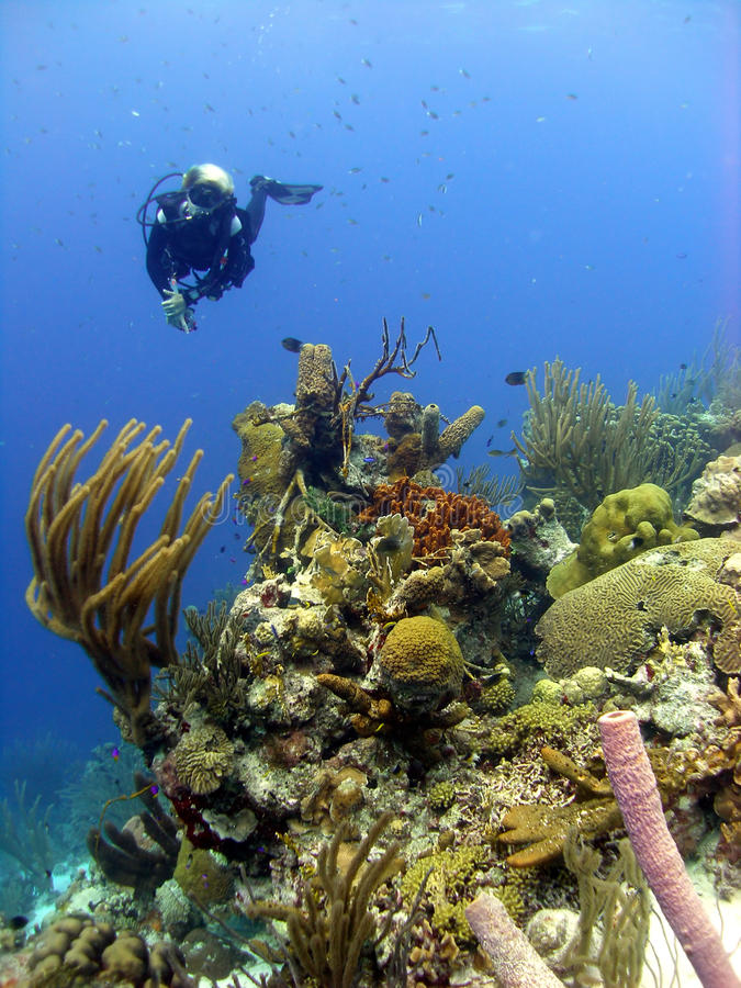 Colourful coral reef scene stock photography