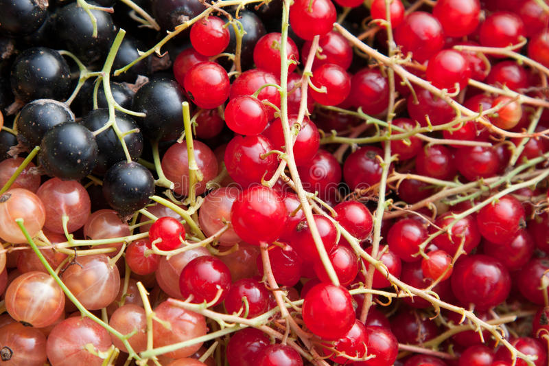 Download Colourful Currants In Assorted Colours Stock Image - Image: 25695099