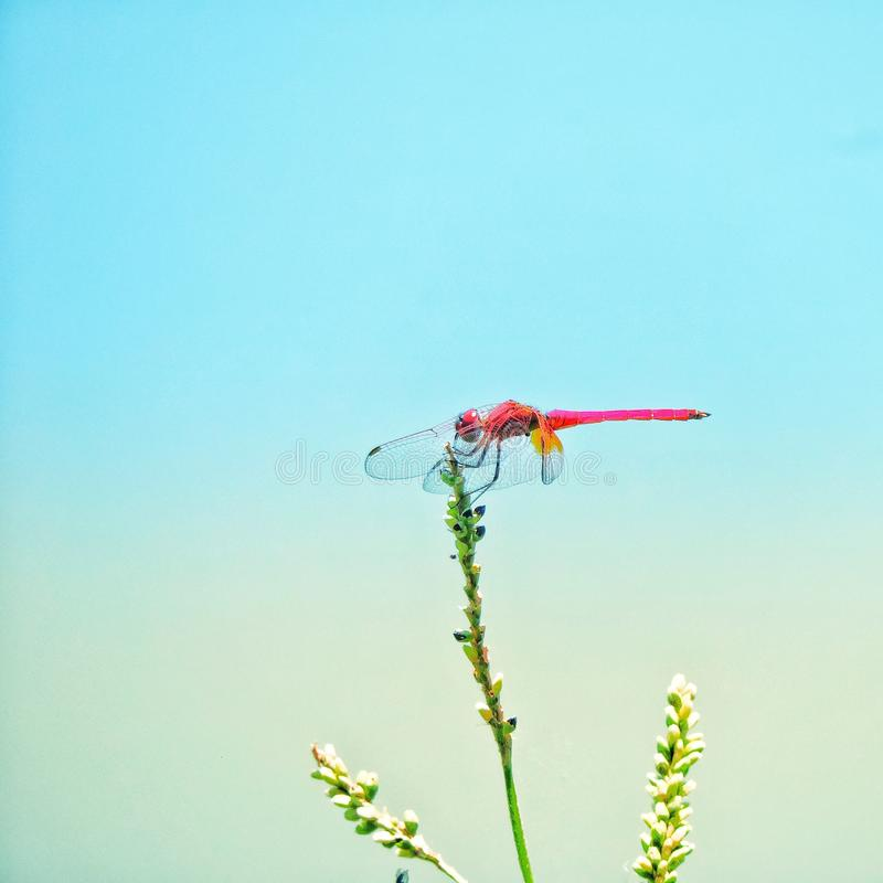 Colourful Dragonfly insect nature wing stock image