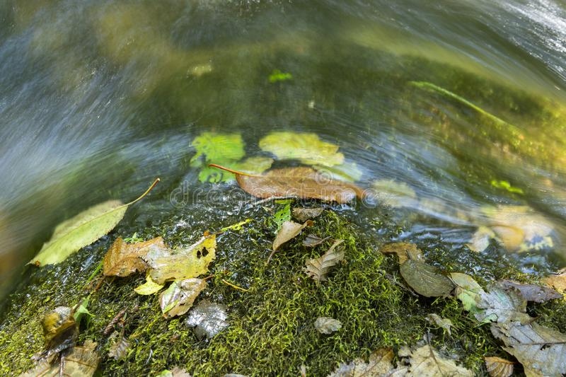 Colourful Fallen leaves on top of a rock with moss and running water. stock photo