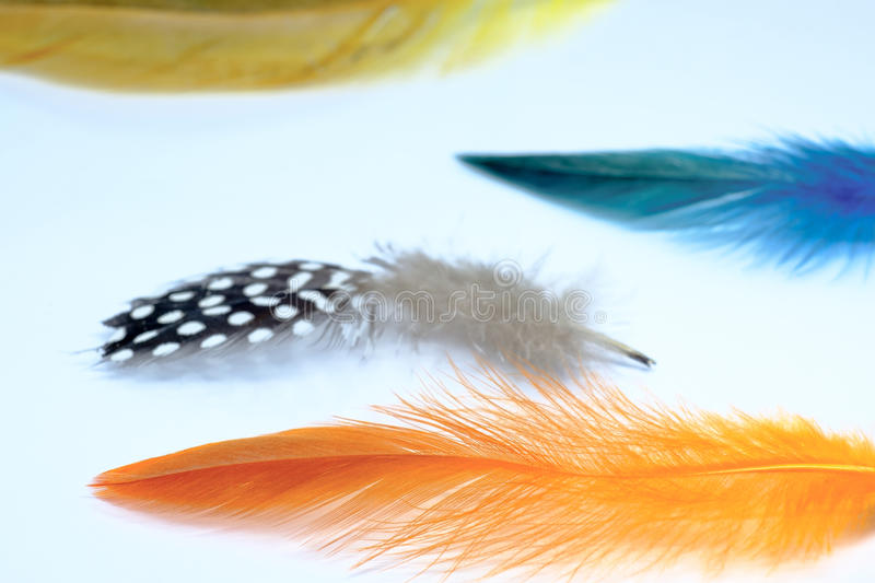 Colourful feather on a white background. isolated. Concept of li stock image