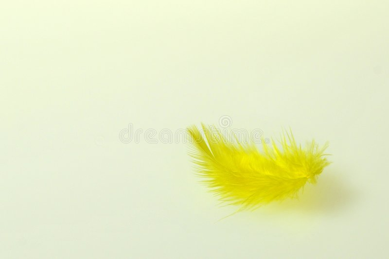 Colourful Feathers. On white background stock images