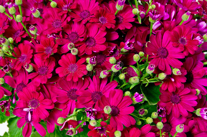 Download Colourful Flower Background Stock Image - Image: 25154779