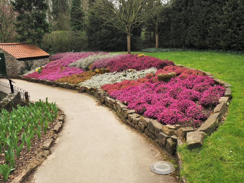 Colourful flower bed with mixed heathers stock photos