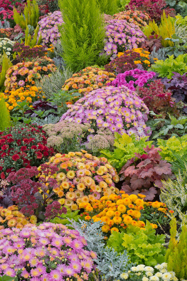 Download Colourful flowerbed stock photo. Image of fresh, landscape - 26652648