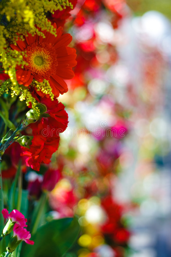 Colourful flowers stock images