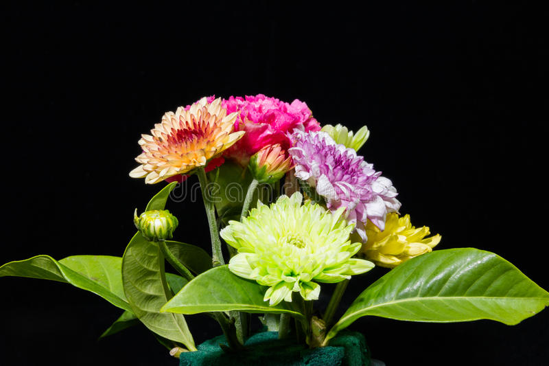 Colourful flowers on black background stock photography
