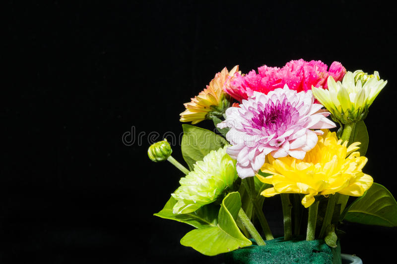 Colourful flowers on black background royalty free stock photography