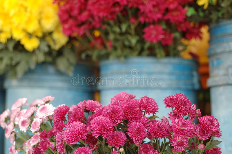 Colourful flowers royalty free stock photo