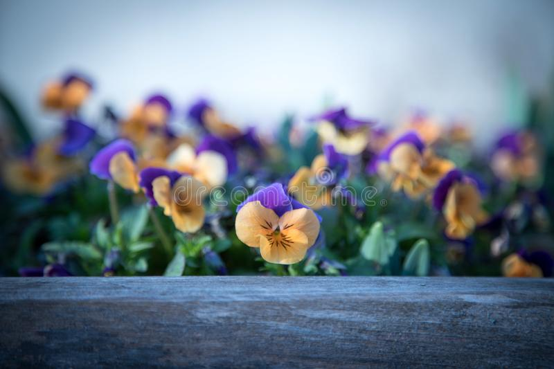 Colourful flowers in the evening sun royalty free stock photography
